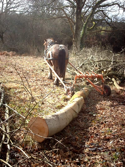 Rowan Working Horses - timber extraction